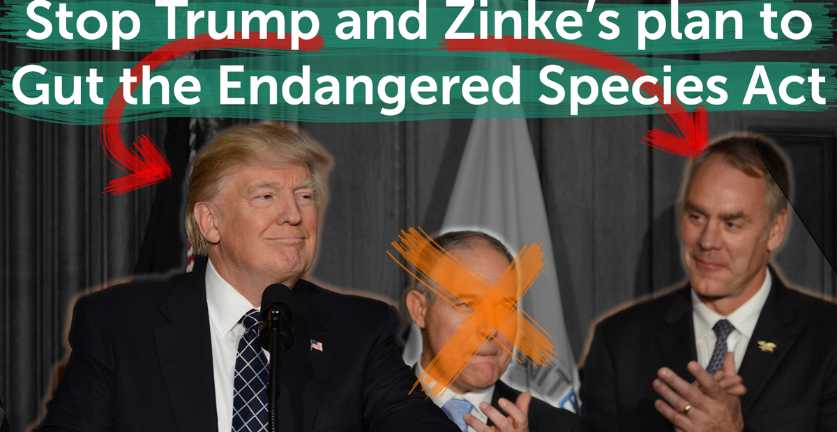 Trump, Pruitt (now fired) and Zinke